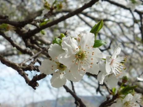 Fiore di bach per enuresi notturna